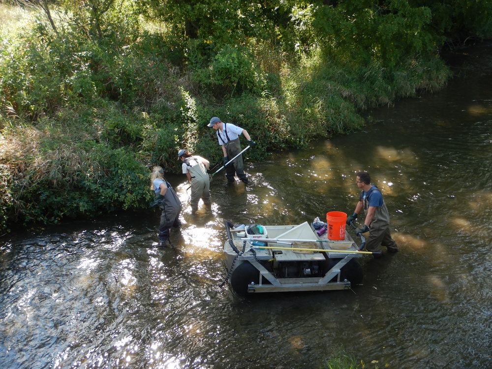 Team electrofishing along the banks of tributary to CJ Brown Reservoir