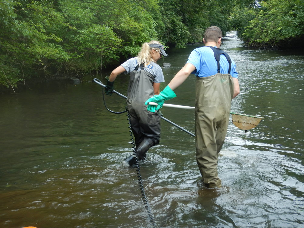 Sampling runs for fish.