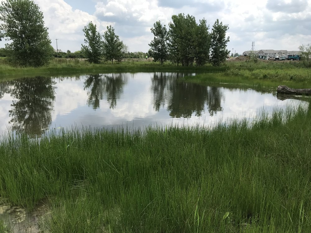 Wetland enhancement pools at mitigation site.