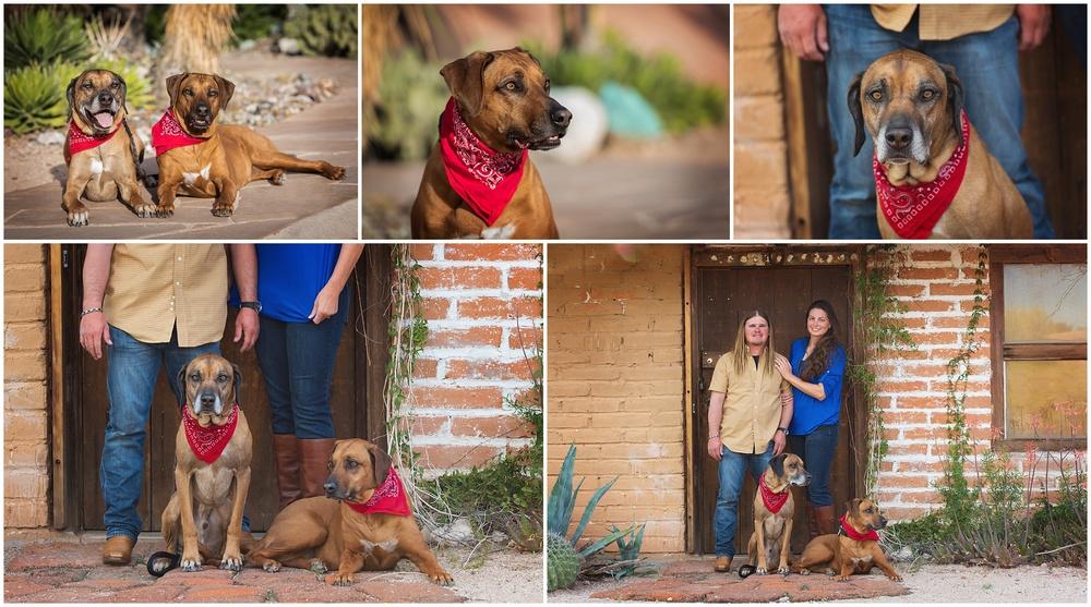 Tucson Pet Portraits