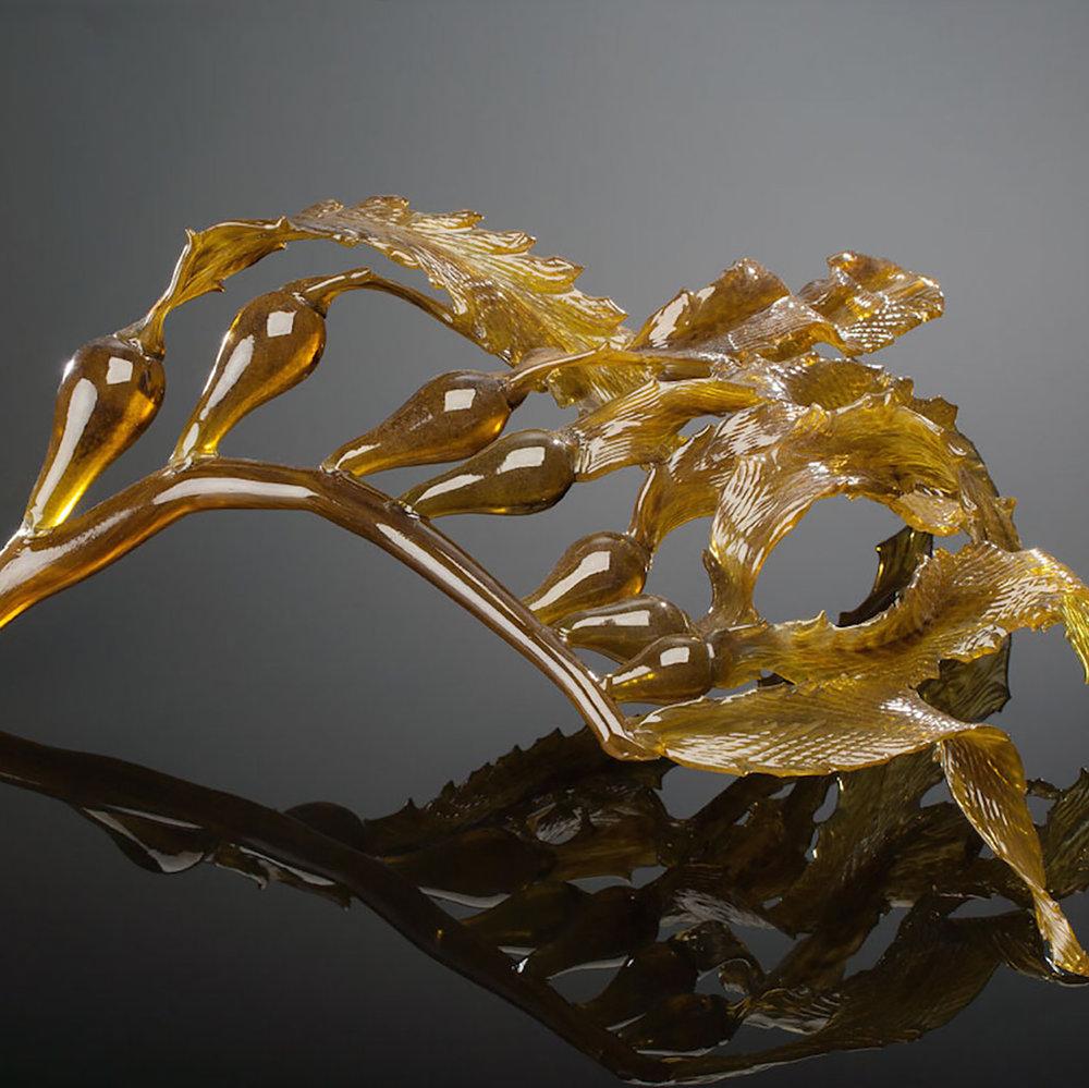 Seaweed Series