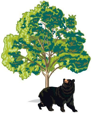 Bear's Tree Service