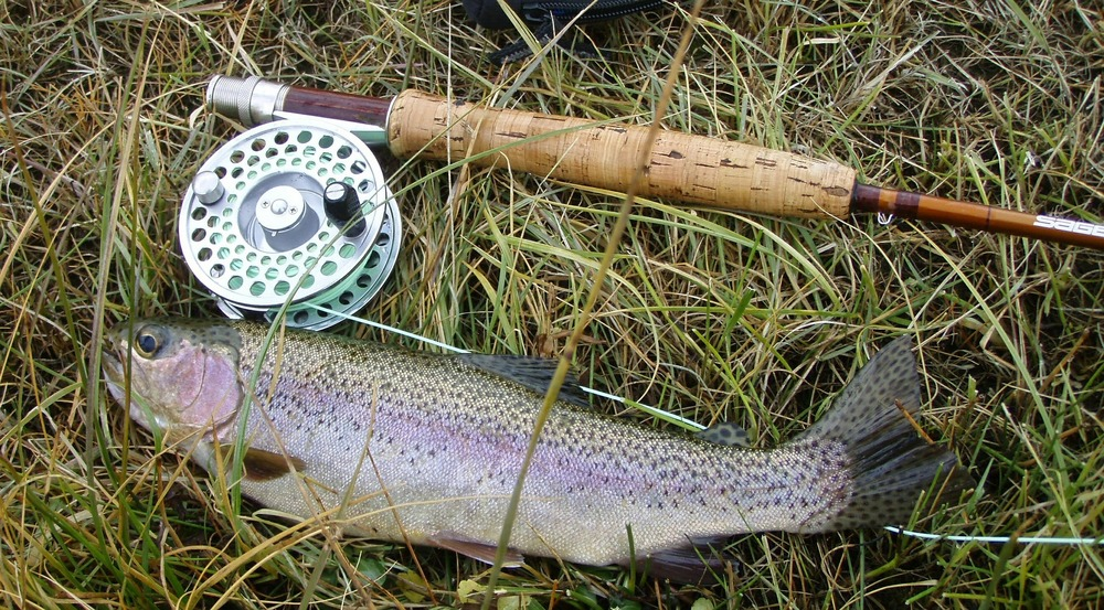 rainbow-trout-609551_1920.jpg