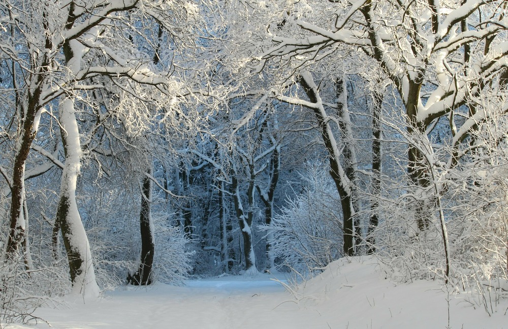 winter-343512_1920.jpg