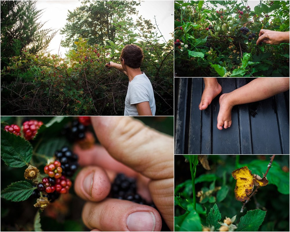 blackberry picking in backyard, documentary photographer