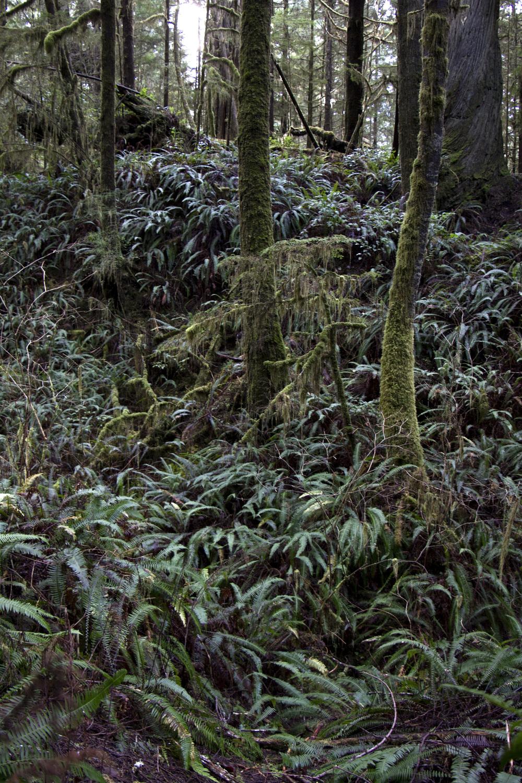 Pacific Rim National Park, British Columbia, Canada