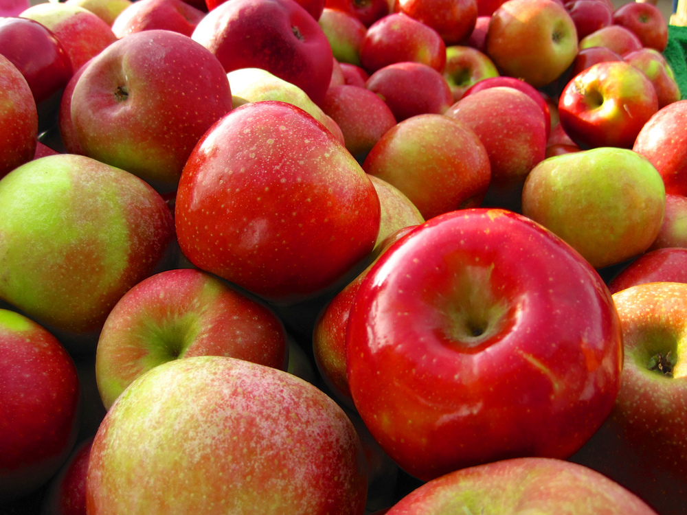 Connecticut falls are known for their beautiful foliage, farmers markets and bountiful apple orchards. Luckily for students at UConn, we have many opportunities to engage with all three through the many apple orchards in the area. (happy via/Flickr)