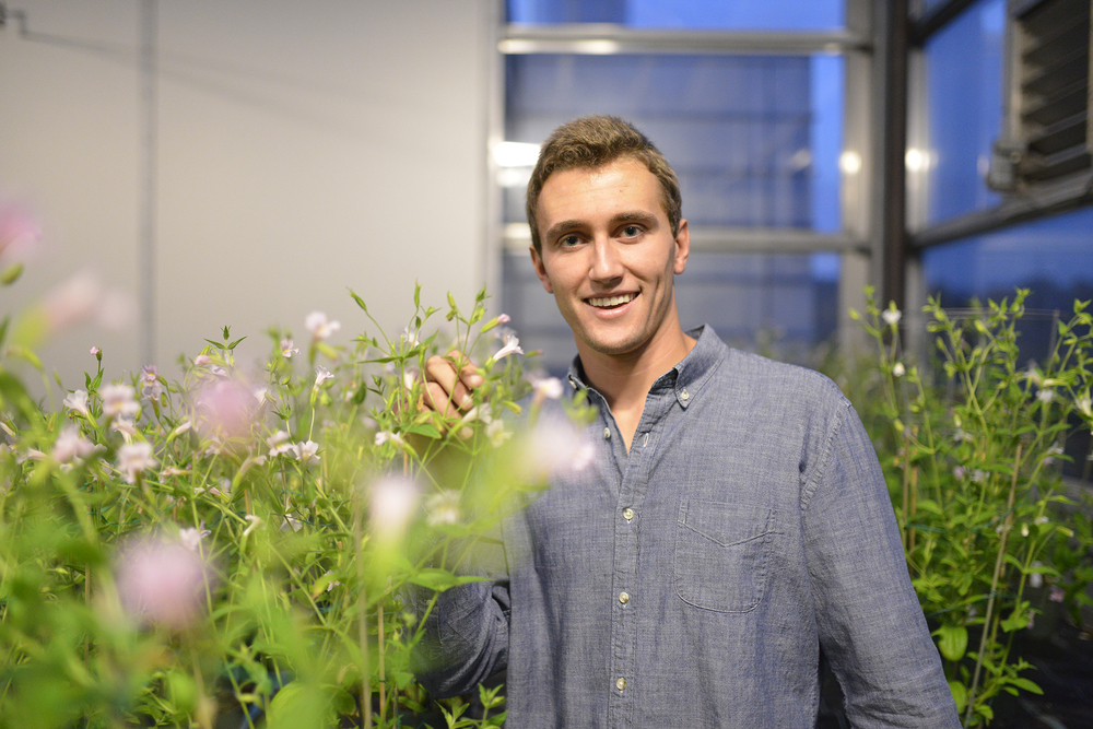 5th semester molecular and cell biology major on the pre-med track Griffin Struyk is pictured in a UConn Greenhouse. Struyk's research is exploring biosynthetic pathways of pigments, helping to better understand the molecular basis of evolution. (Jason Jiang/The Daily Campus)
