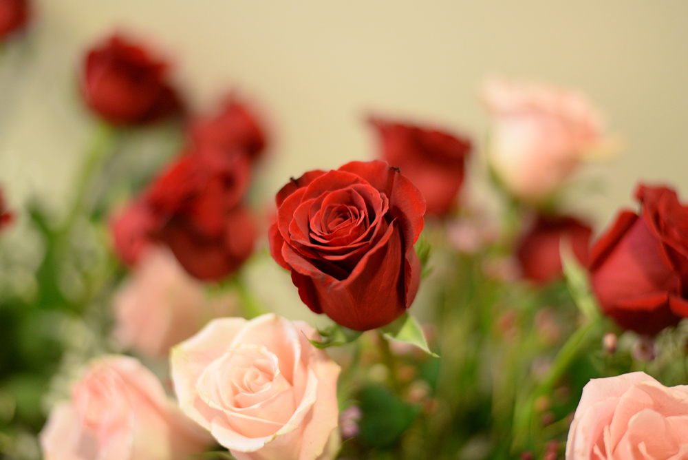 Roses are seen in The Flower Pot flower store in Storrs Center in Storrs, Connecticut on Thursday, Feb. 11, 2016. (Amar Batra/The Daily Campus)