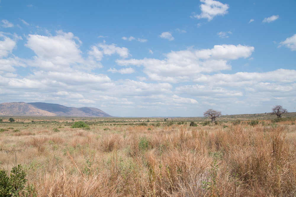 A landscape shot of Ruaha national park. Ruaha stretches across more than 7,809 square miles. (Amar Batra/Daily Campus)