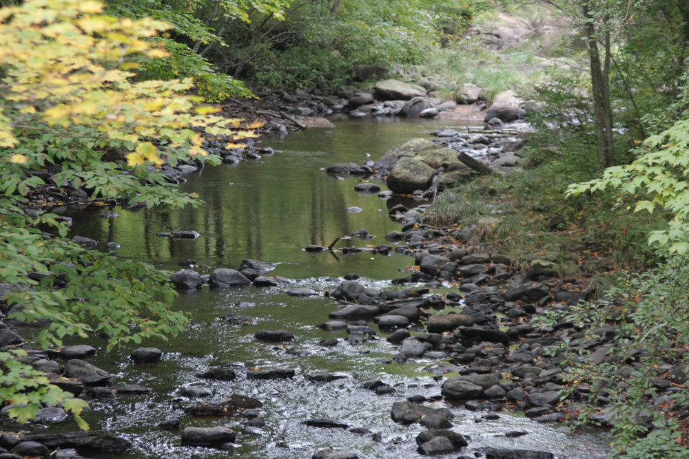 The Fenton River runs along the Fenton tract in the UConn forest, located behind Horsebarn Hill on the Storrs Campus. (File Photo/The Daily Campus)