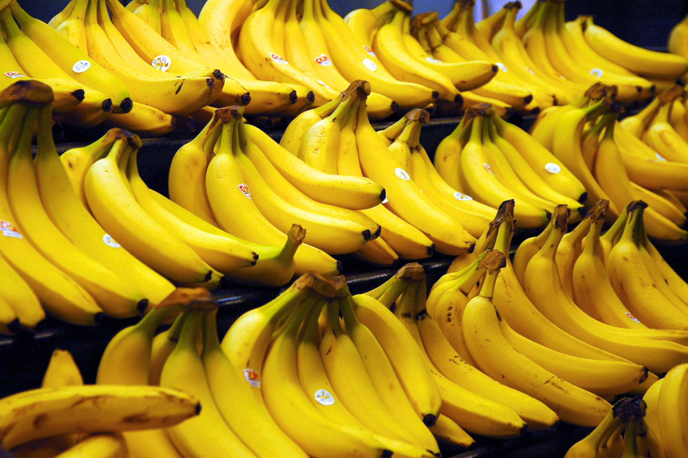 Cavendish bananas are the main commercial banana cultivars sold in the world market. (Steve Hopson/Wikipedia/Creative Commons)
