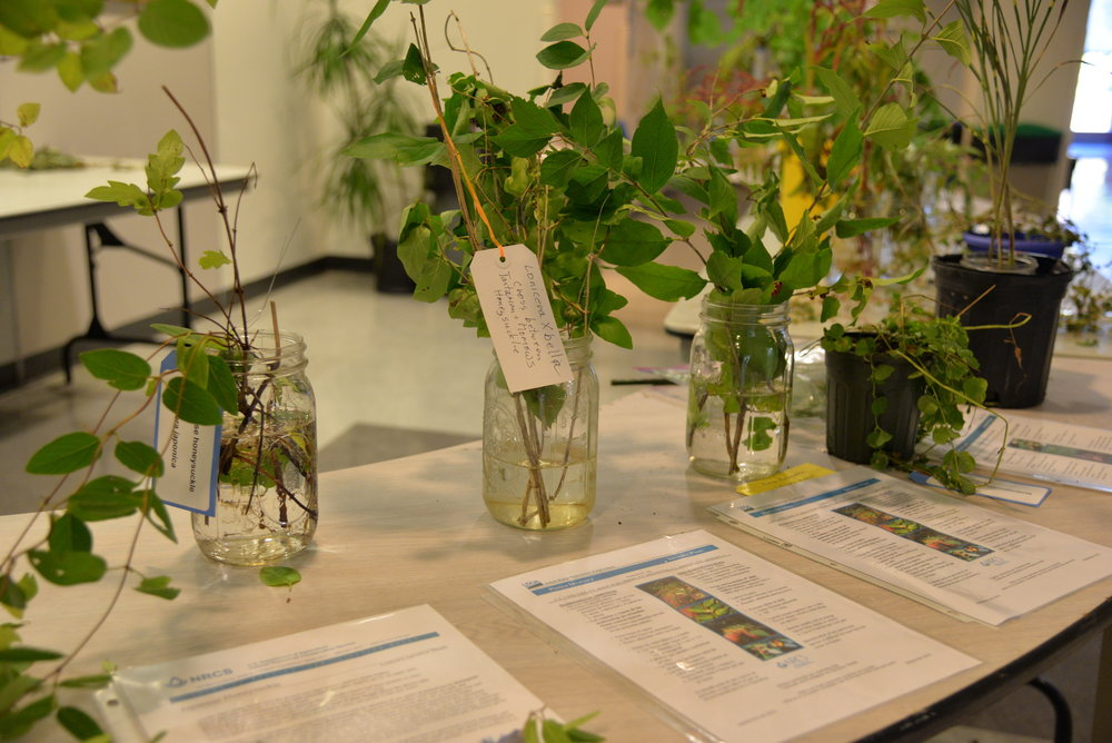 The Invasive Plant Symposium was an event put together by the Connecticut Invasive Plant Working Group to help educate, connect and explore the region's invasive plant problems, organizations, and solutions with the help of over 50 departments. (Amar Batra/The Daily Campus)
