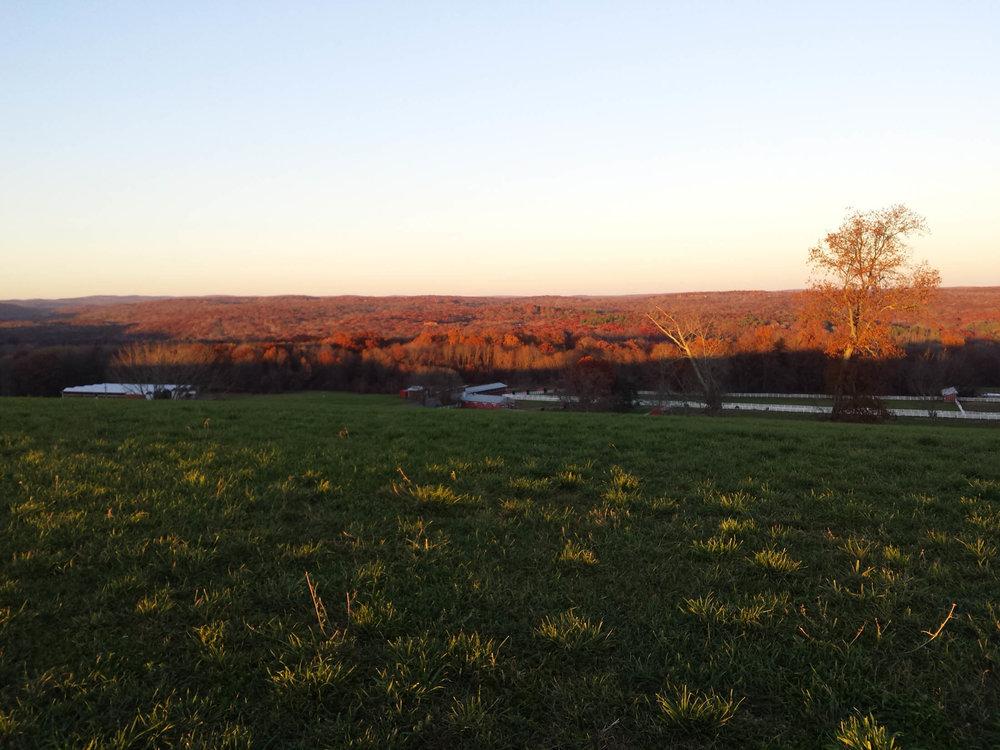 Horsebarn Hill