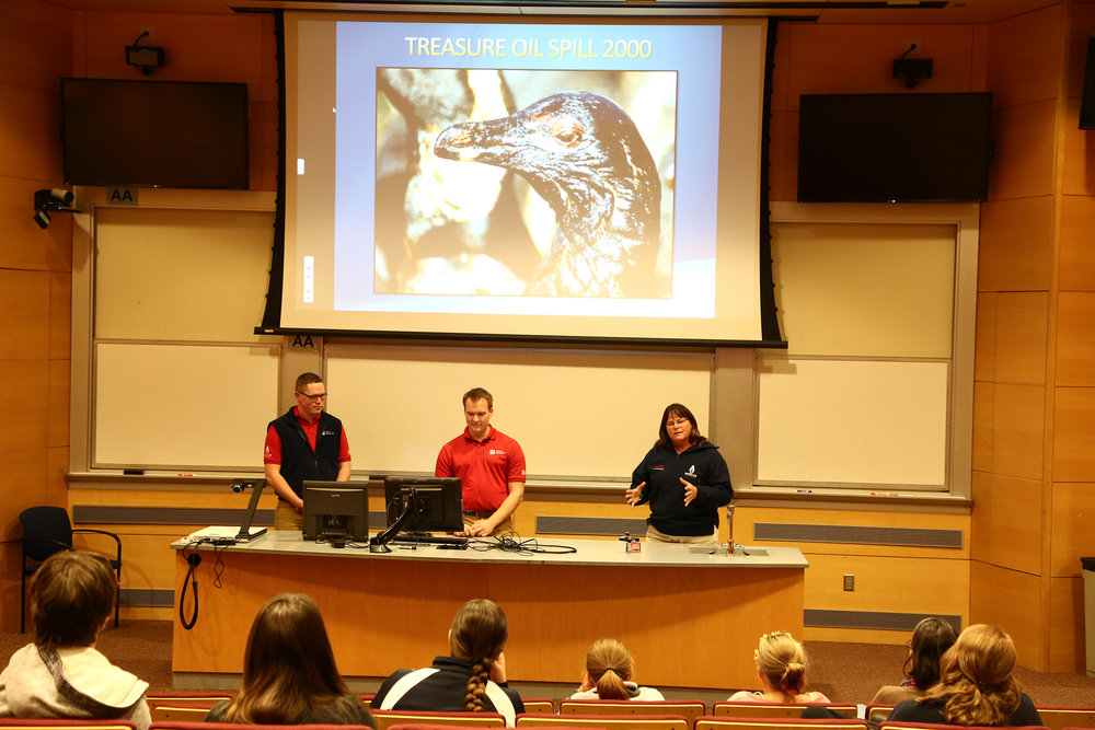 Marine biologists and UConn alumni, Josh Davis, Laurie Macha, and Eric Fox discussed African penguin conservation in a lecture hosted by the Connecticut State Museum of Natural History on Saturday, Nov. 12.  (Songqing Zhao/The Daily Campus)
