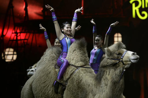 "Ringling Bros. and Barnum & Bailey acrobats ride camels during a performance Saturday, Jan. 14, 2017, in Orlando, Fla. The Ringling Bros. and Barnum & Bailey Circus will end the ""The Greatest Show on Earth"" in May, following a 146-year run of performances. (Chris O'Meara/ AP)"