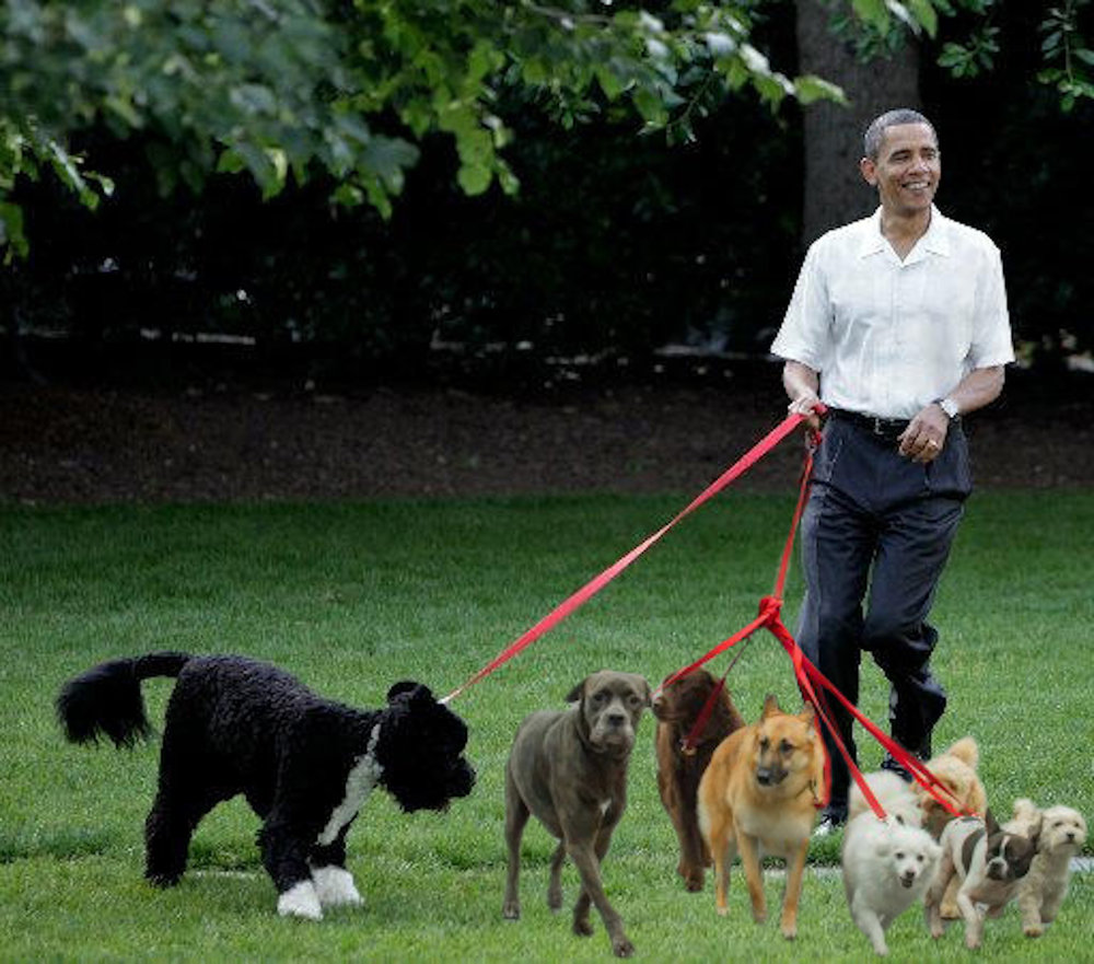 Dog walking is a possible profession Barack Obama could pick up after he leaves the White House. After a stressful eight years as President, spending time with furry friends would be a walk in the park. (Photoshop by Olivia Stenger, staff photographer)