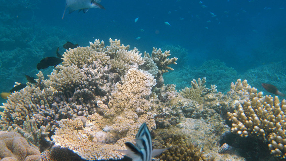 Snapshot of the Great Barrier Reef off the coast of Queensland, Australia, 2012.  The Great Barrier Reef is one of the many reefs that suffers from significant bleaching. (Robert Linsdell/Creative Commons)