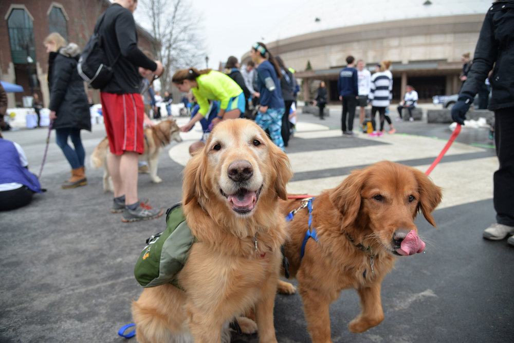 Students and community members join UConn Paws and Claws to run a 5K, play with dogs and raise money for Big Fluffy Dog Rescue on March 25, 2017. The event raised $1,500 for the dog rescue. (Amar Batra/The Daily Campus)