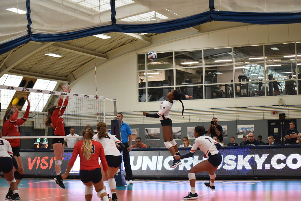 UConn volleyball in action earlier in the season in the Dogpound Challenge. (Charlotte Lao/The Daily Campus)