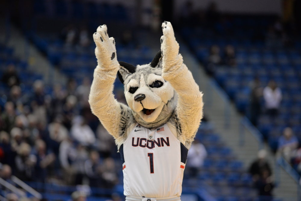 When comparing UConn's mascot to Northeastern's, it's clear we have the top dog.  (The Daily Campus/stock photo)