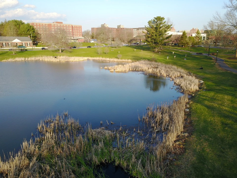UConn campus by Mirror Lake on a sunny day (File Photo/The Daily Campus)