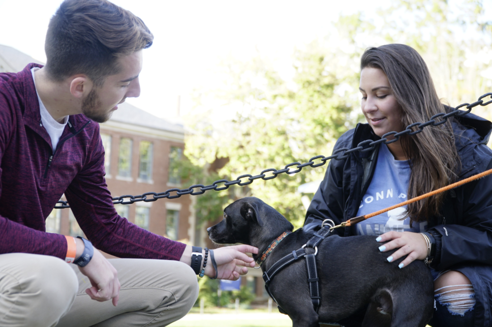 The University of Connecticut Paws and Claws, the event, attended by dogs and humans alike, raised money for theFidelcoGuide Dog Foundation through a number of games, crafts and raffles on Saturday Oct. 13. (Eric Wang/The Daily Campus)