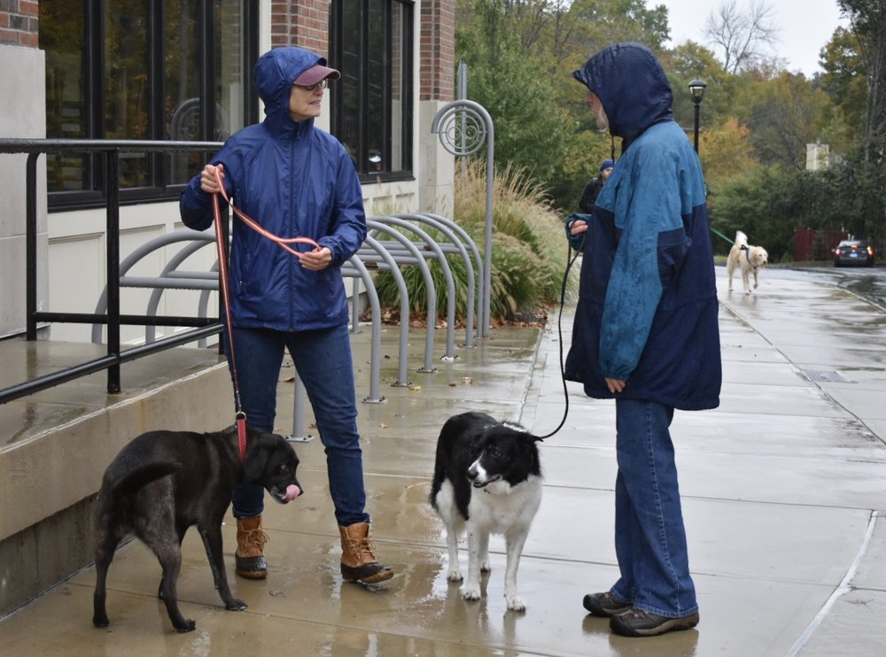 The Mansfield Pup Crawl was a pleasant stroll around Storrs Center and its surrounding trails that both the dogs and their owners enjoyed. (Lauren Rudin/The Daily Campus)