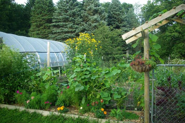 Mixed fruit & vegetables garden and polytunnel