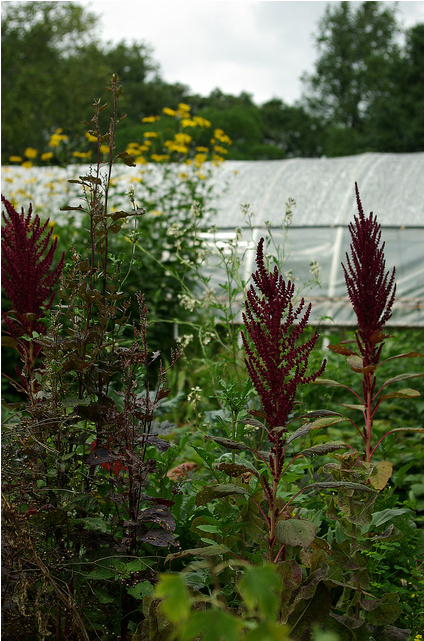 Diverse plantings offer displays of beautiful colors, shapes, and textures