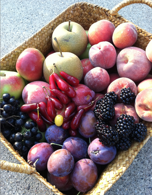 Enjoying an abundance of mouthwatering fruits is just one of the many benefits of landscaping with edibles.