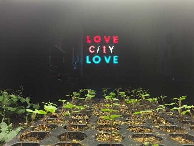 love-city-love