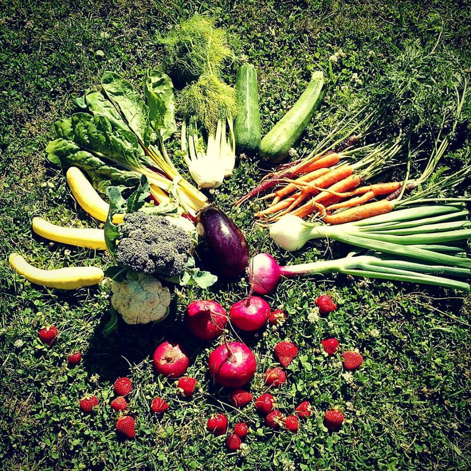 A basket of organic foods provided by Camas Swale Farms.