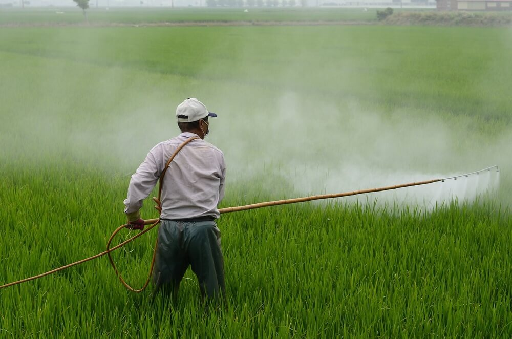 Herbicide being sprayed into a rice field