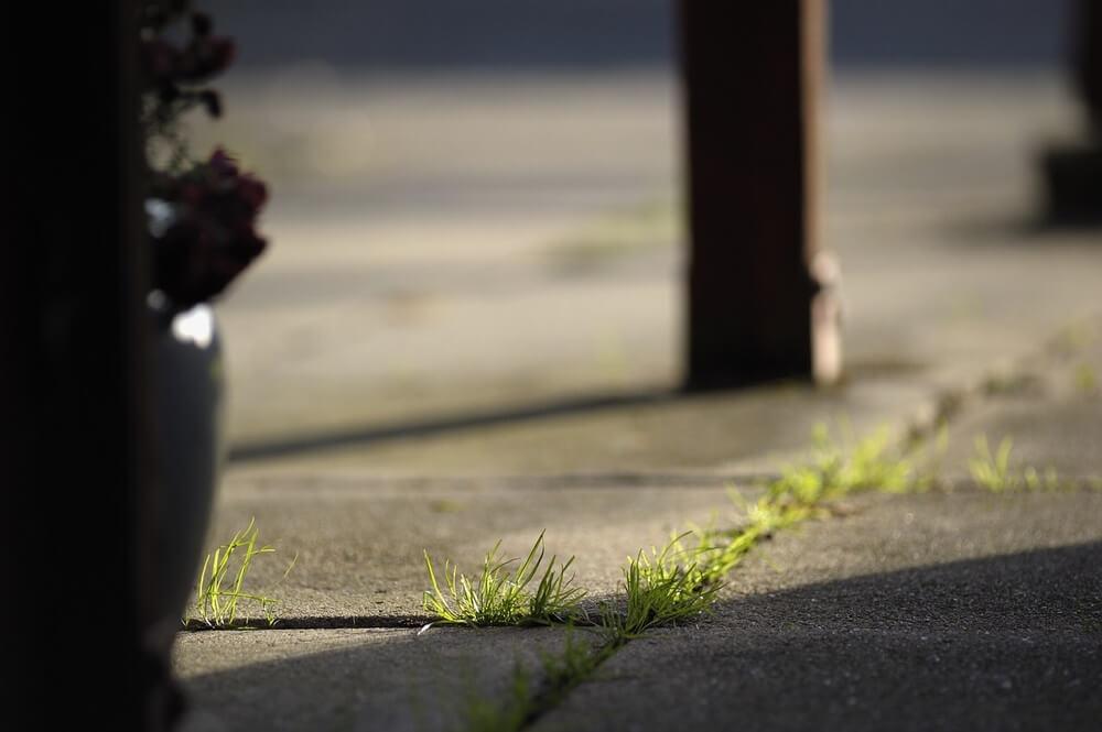 Weeds growing in cracks between cement