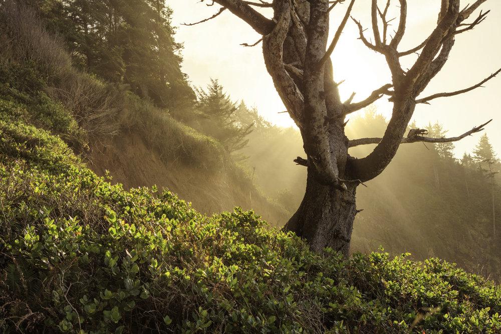 Backlit tree in Oregon