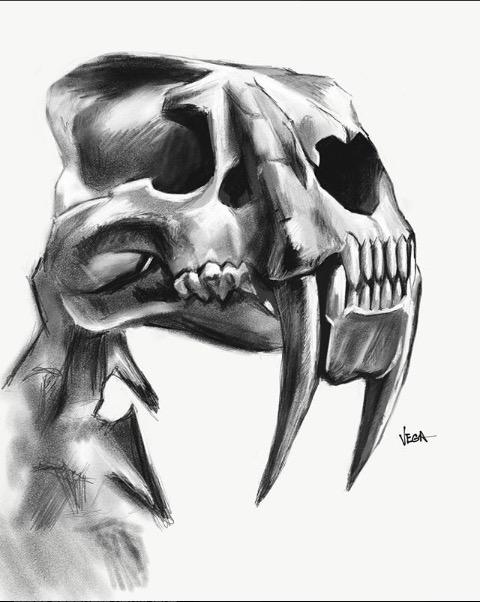 Smilodon Skull