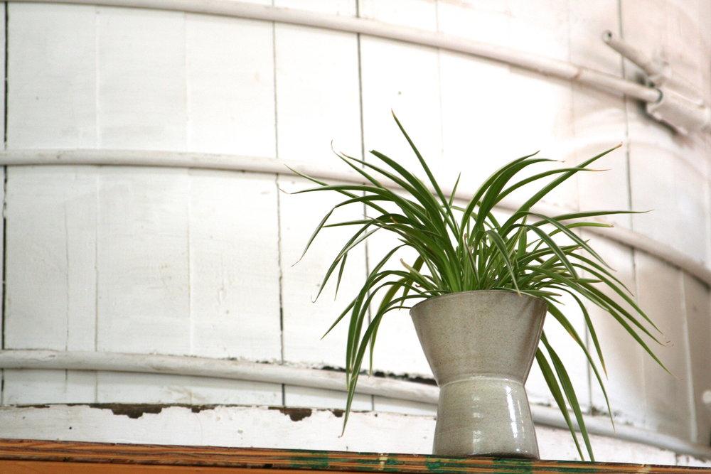 drum plant.JPG