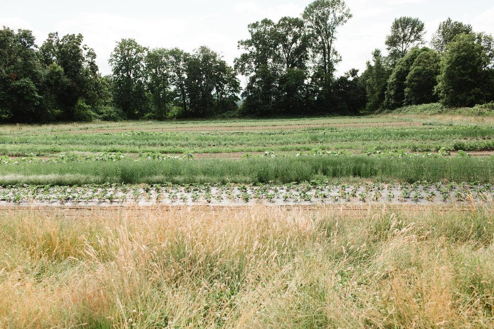 manna farm-39.jpg