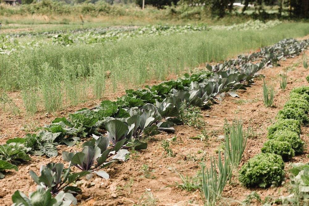 manna farm-29.jpg