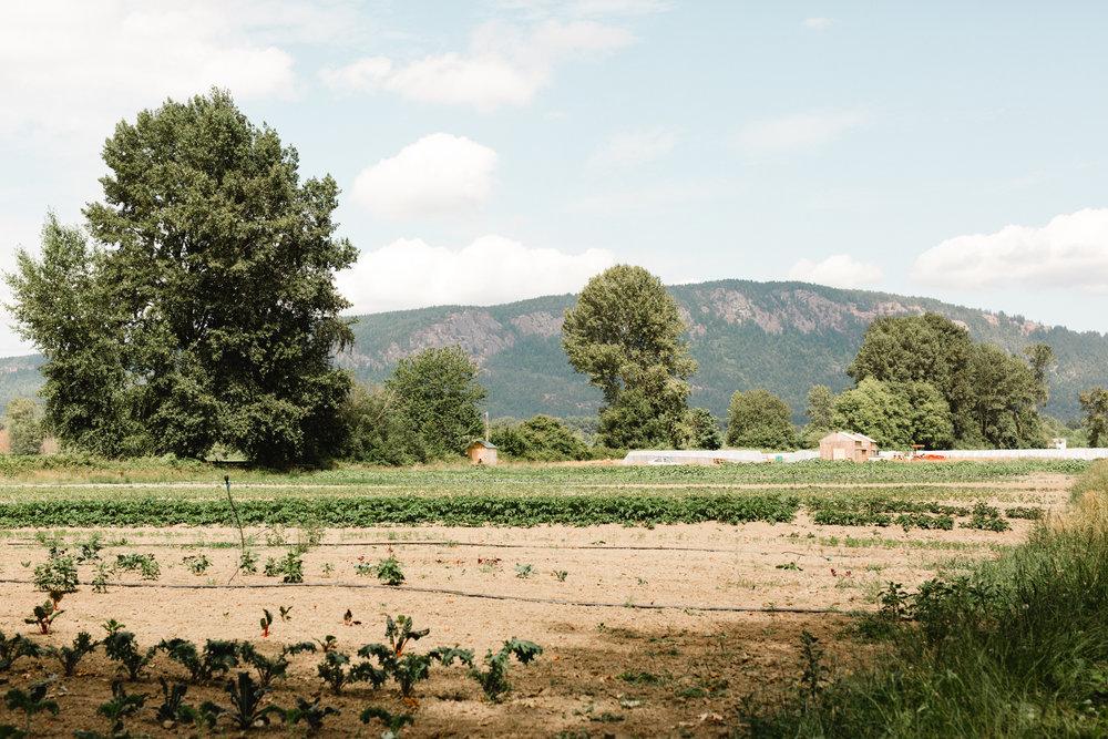 manna farm-23.jpg