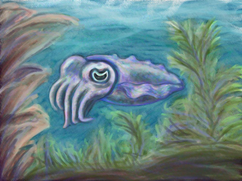 Cuttlefish Cutie