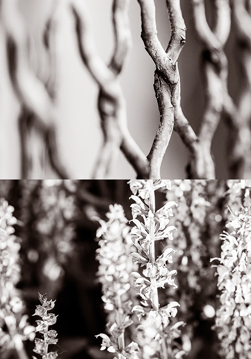 Fence/Lilacs © Deena Roth Photography