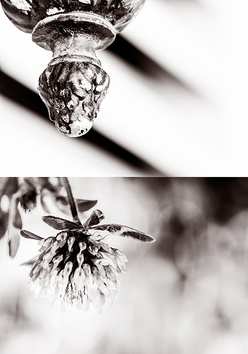 Iron Bud/Thistle © Deena Roth Photography