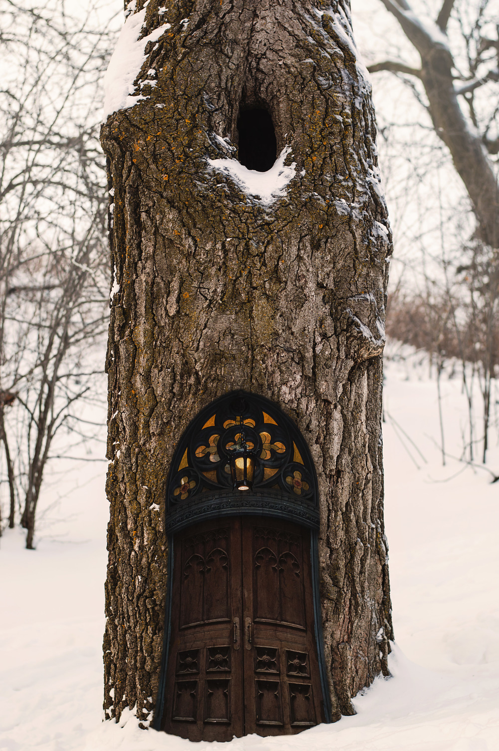 Tree House © Deena Roth Photography