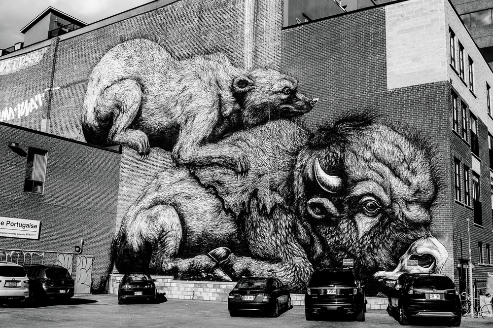 Street Art by ROA © Deena Roth Photography