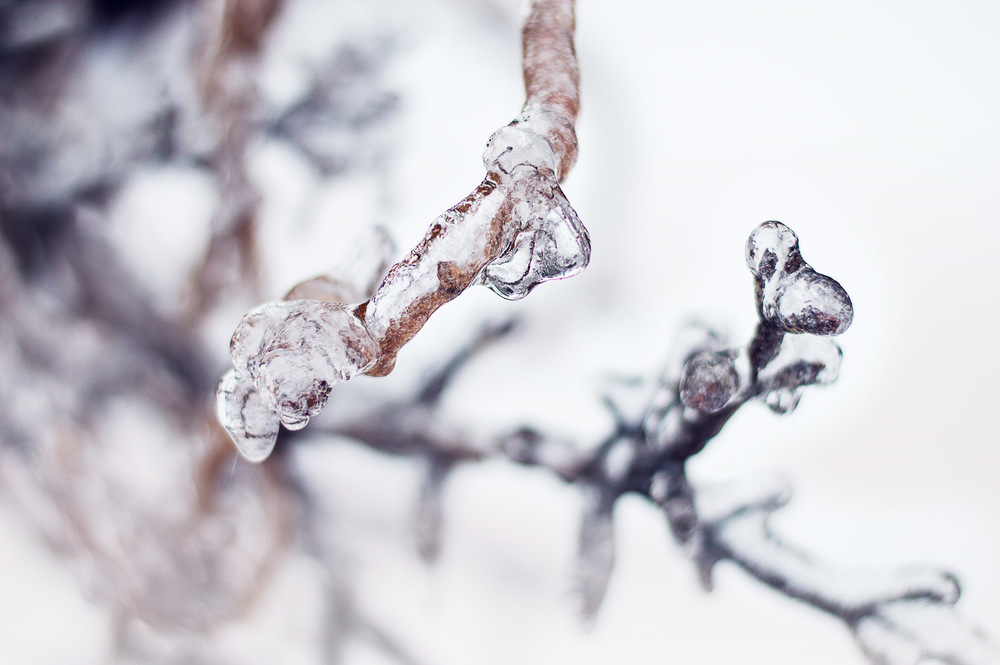 Frozen © Deena Roth Photography