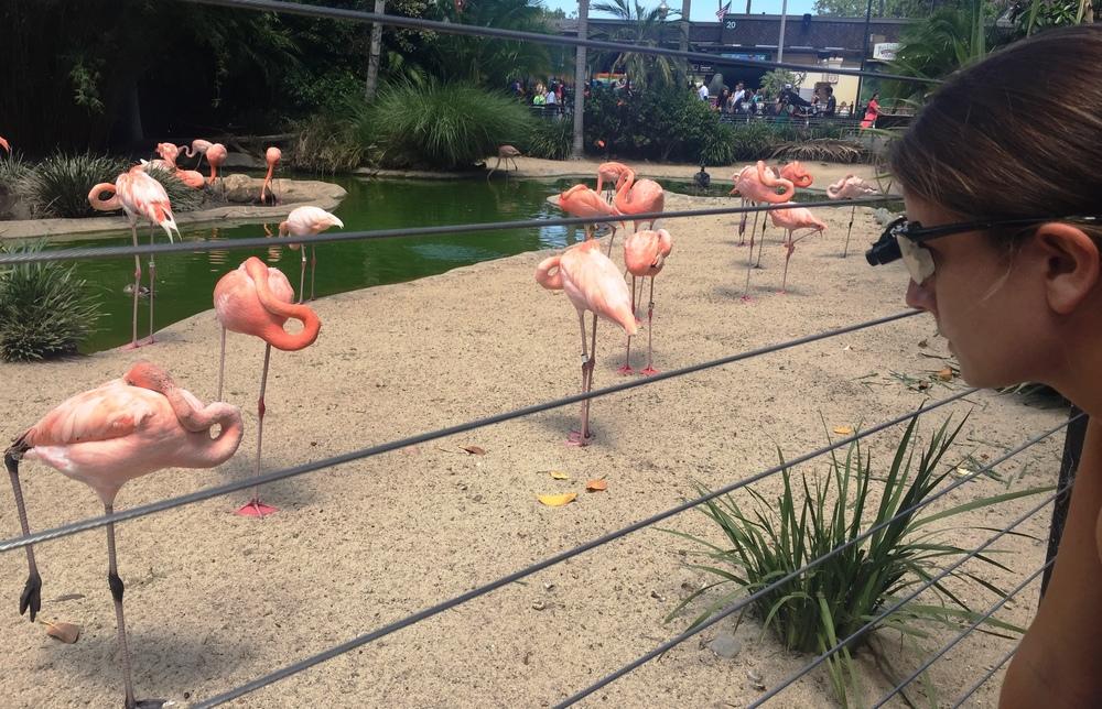FlyWire @ San Diego Zoo
