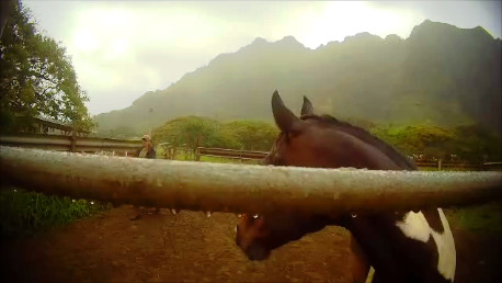 Kualoa Horse Cam_6_e.png