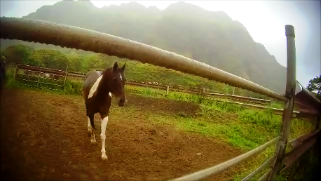 Kualoa Horse Cam_7_e.png
